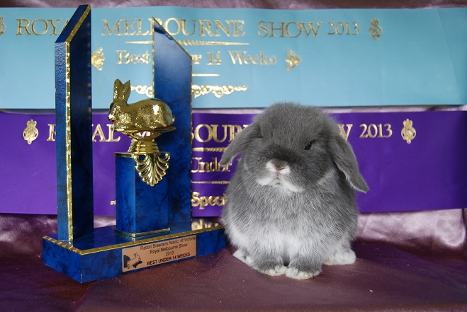 camelot mini lop kits